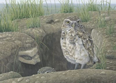 Burrowing Owl, 8x10